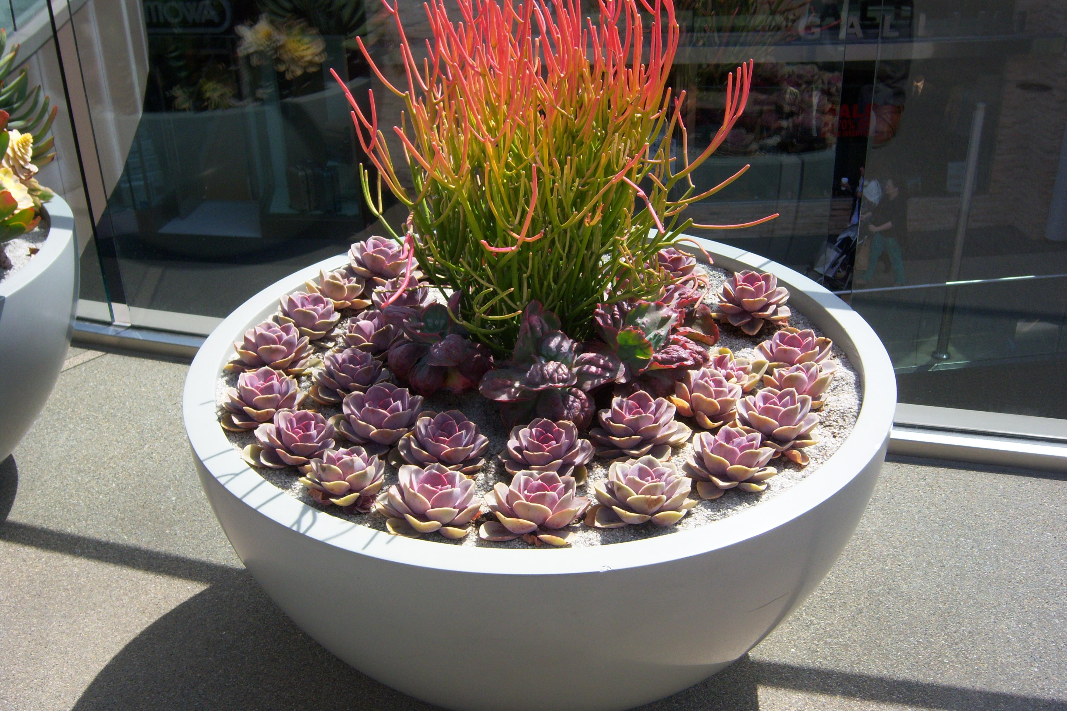 Ideas verdes para disfrutar arquitectura propiedades - Como cuidar las hortensias de exterior ...